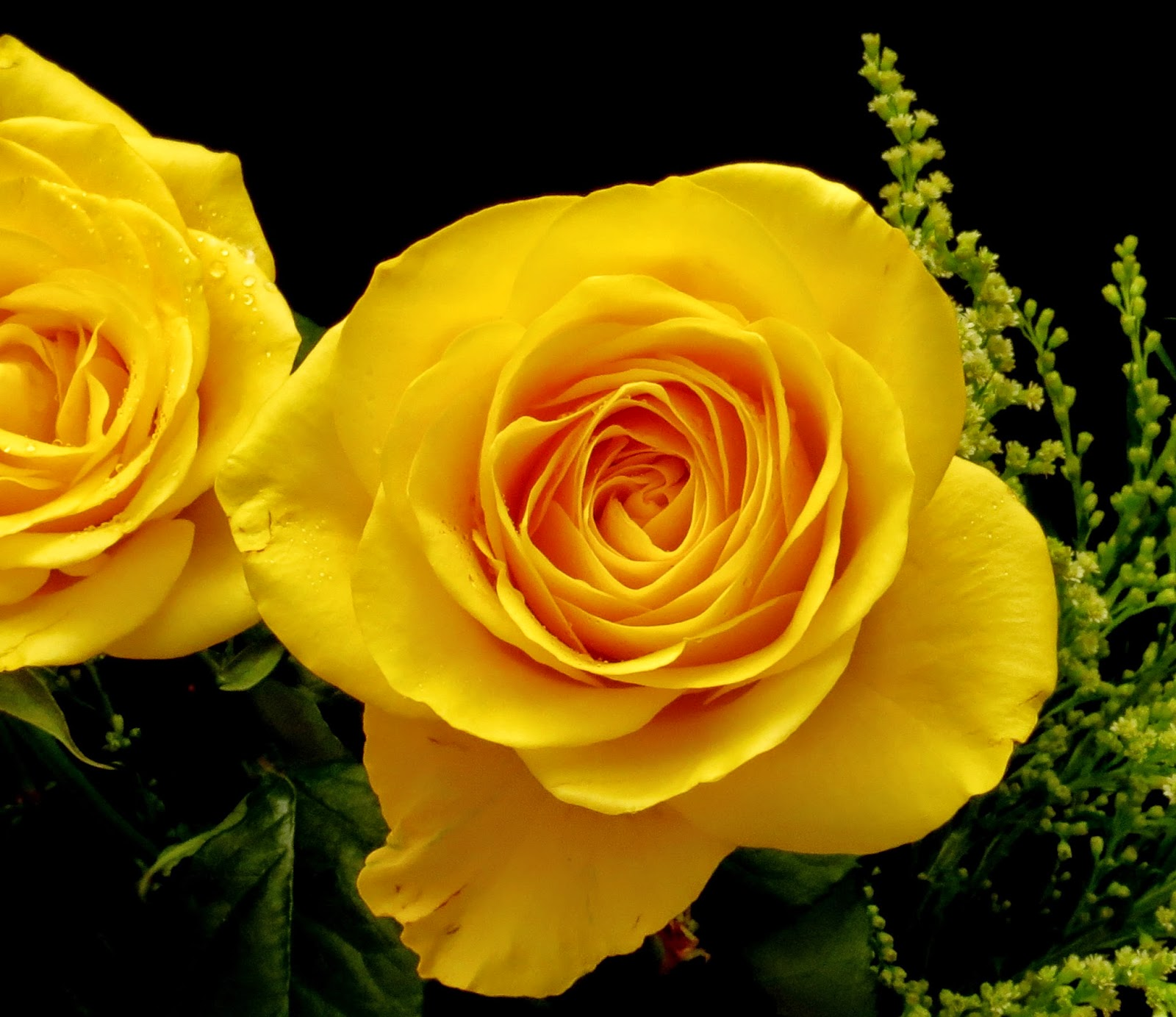 Cut Yellow Roses - Milnerton, Cape Town Photo with (non-DSLR) Canon PowerShot SX40 HS.