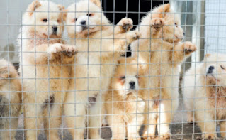¿Se pueden cruzar perros padres con hijos o entre hermanos?