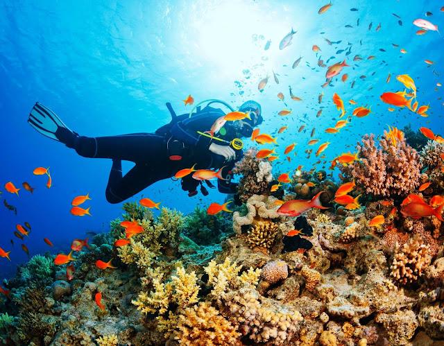 Los buzos pueden encontrarse con varias especies interesantes de peces, incluyendo un mero gigante, tiburones niñera y varias especies de tiburones de arrecife, como el tiburón de arrecife del Caribe.