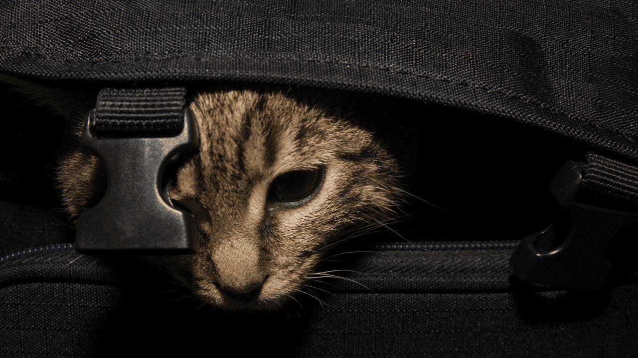gato escondido en una maleta