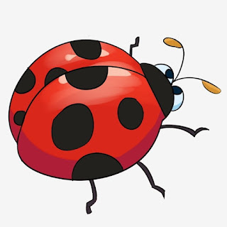 Gambar hewan serangga berwarna