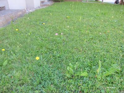 lawn in Switzerland