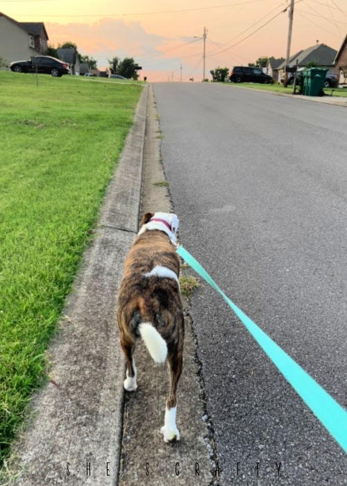 Walking the dog on a leash at sunset.
