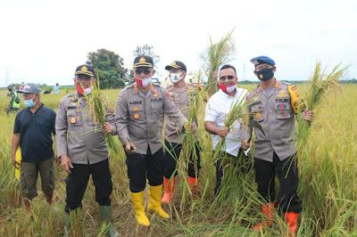 Kapolda Jambi bersama Danrem 042/Gapu, Hadiri acara Panen Raya Serentqk dan Penaburan Benih Ikan di Tungkal Ulu