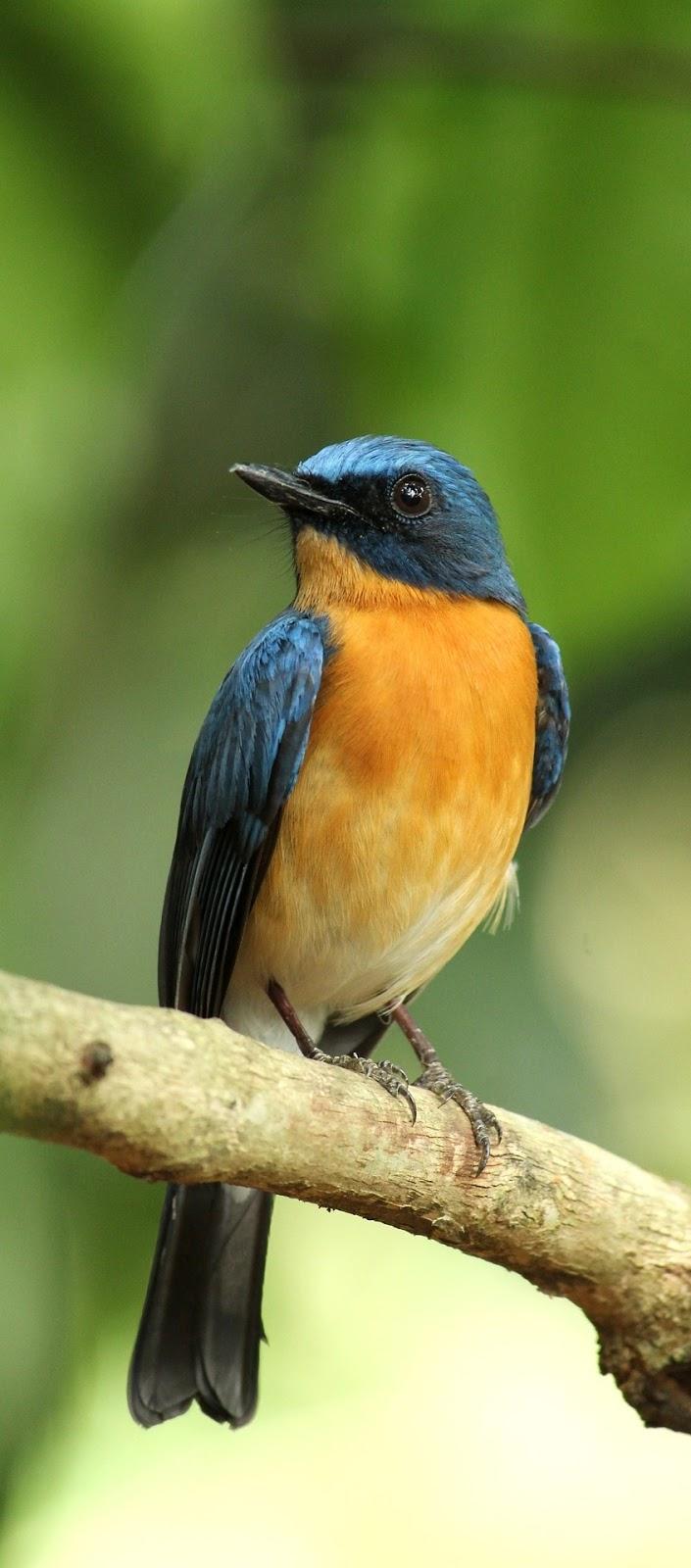 A beautiful bird.