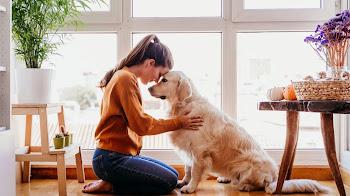 Conoce porque son importantes las mascotas en el hogar