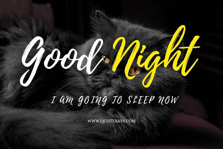 Good Night Cute Black Cat