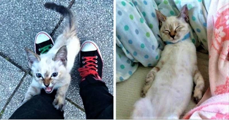 Πως θα μάθουμε μια αδέσποτη γάτα να ζει σε διαμέρισμα;