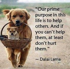 Our prime purpose in this life is to help others. And if you can't help, at least don't hurt them. Dalai Lama