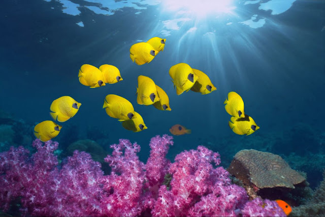 Apa yang di maksud bioma perairan