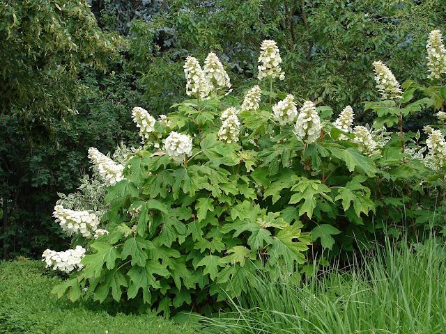 New Utah Gardener Perennials
