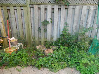 Playter Estates late summer garden clean up before by Toronto Paul Jung Gardening Services