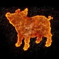 2007 الأبراج الصينية - خنزير النار