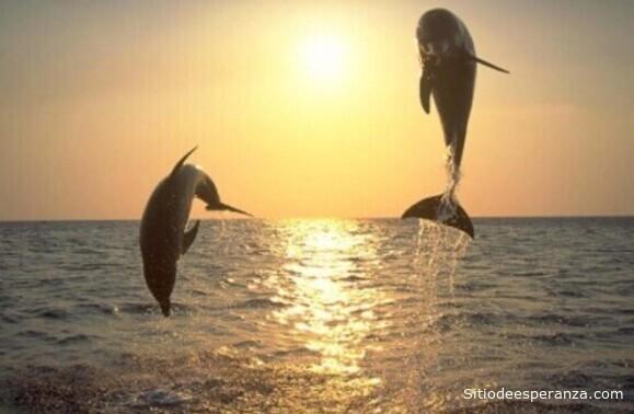 Delfines saltando en el mar