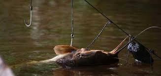 Download 6700 Koleksi Gambar Umpan Ikan Lele Terbaru