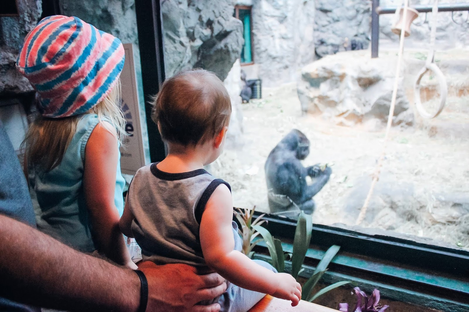 kids looking at gorillas at Buffalo Zoo