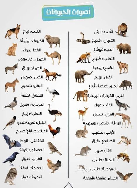 أصوات الحيوانات في صورة