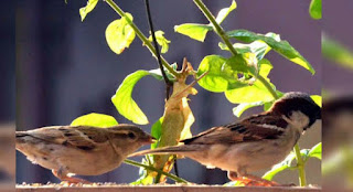 Two sparrow funny story in english