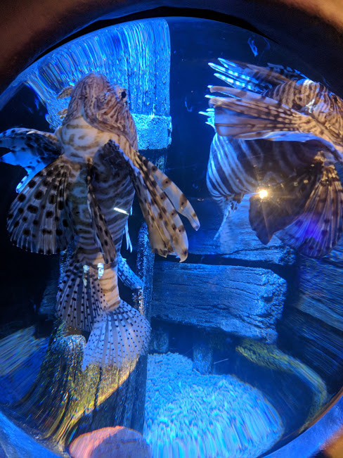 The Best Sea Life Aquariums in the UK  - Sea Life Manchester