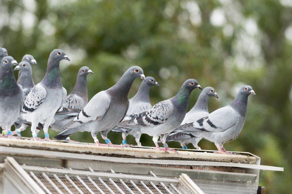 Excremento de palomas fatal, administradora a juicio por homicidio culposo
