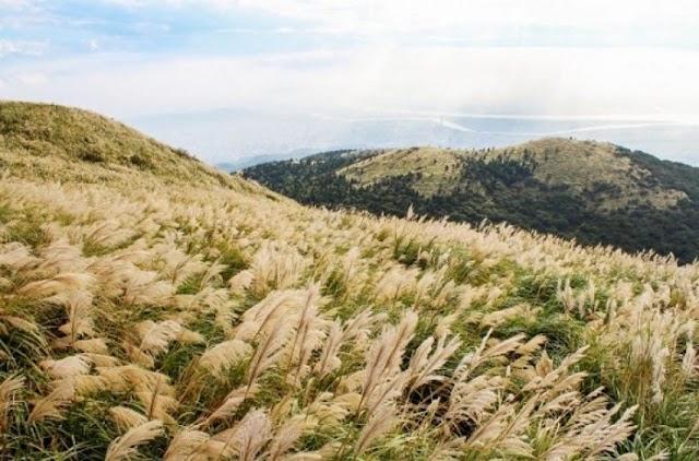 Đi tìm nàng thơ cỏ lau Bình Liêu