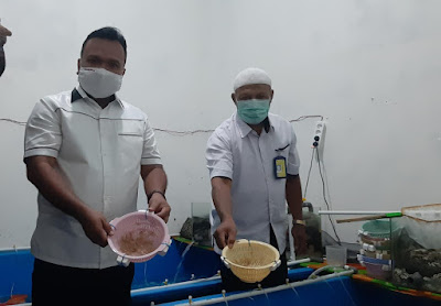 Ditreskrimsus Polda Jambi gagalkan penyelundupan 44.800 ekor benih lobster