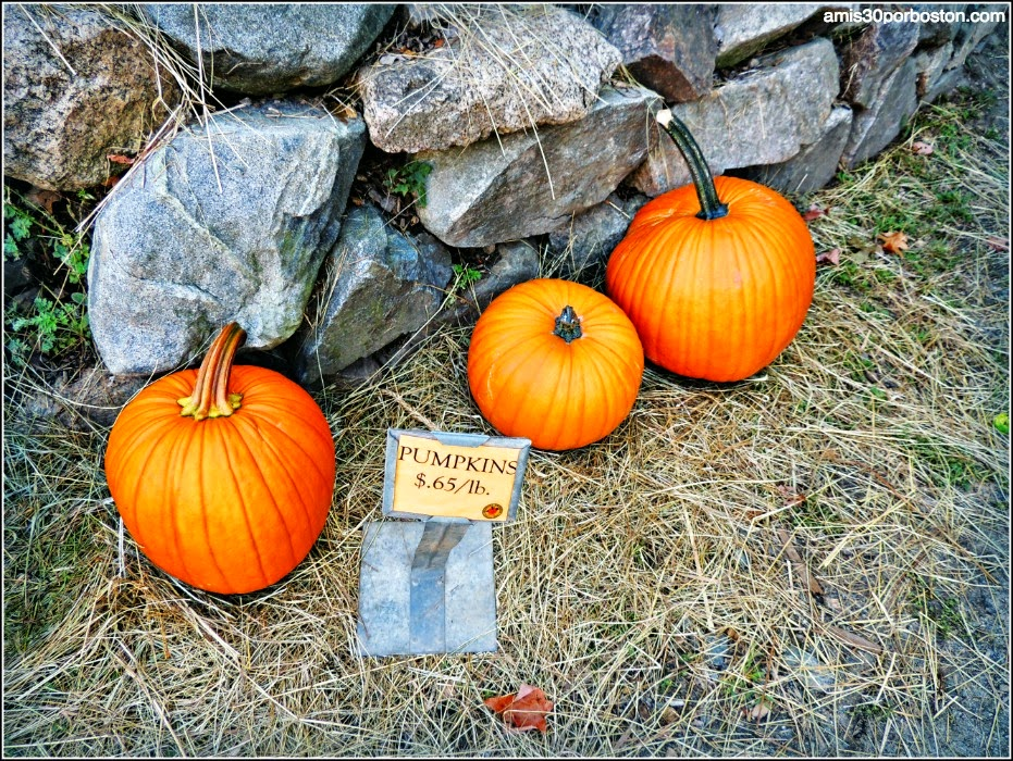 Russell Orchards Farm Store & Winery: Calabazas