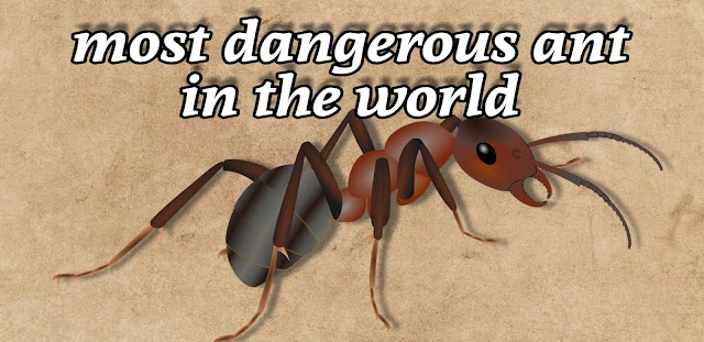 most dangerous ant in the world 2019