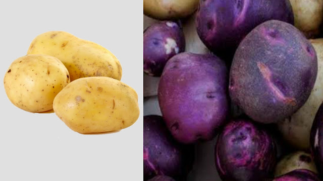 आलू की नयी किस्म झुलसा रोग नजदीक ना आये, Agriculture with Indian Scientists, New Potato Species