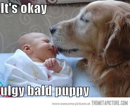 Basic Dog Training Dogs Lick Babies Faces Stop Dog