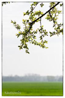 Faág és zöld mező az Alföldön