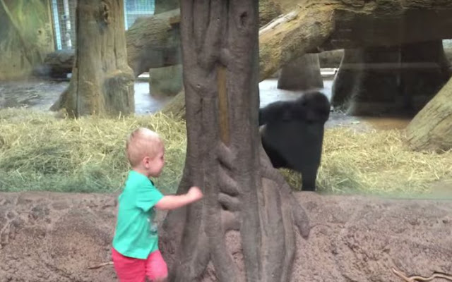 Toddler playing Gorilla Toddler at the Columbus Zoo
