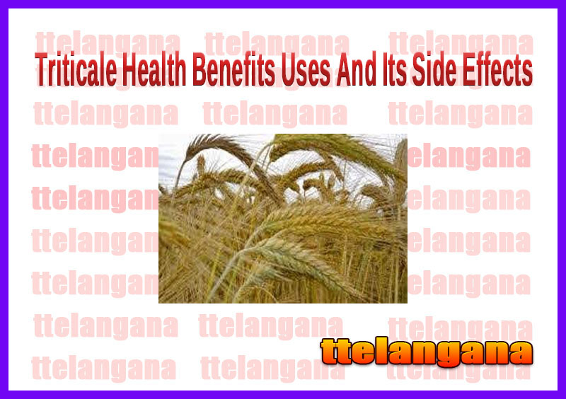 Triticale Health Benefits Uses And Its Side Effects