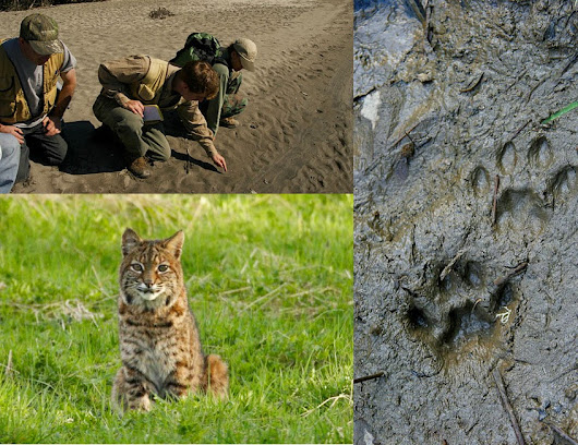 Become a Wildlife Tracker!