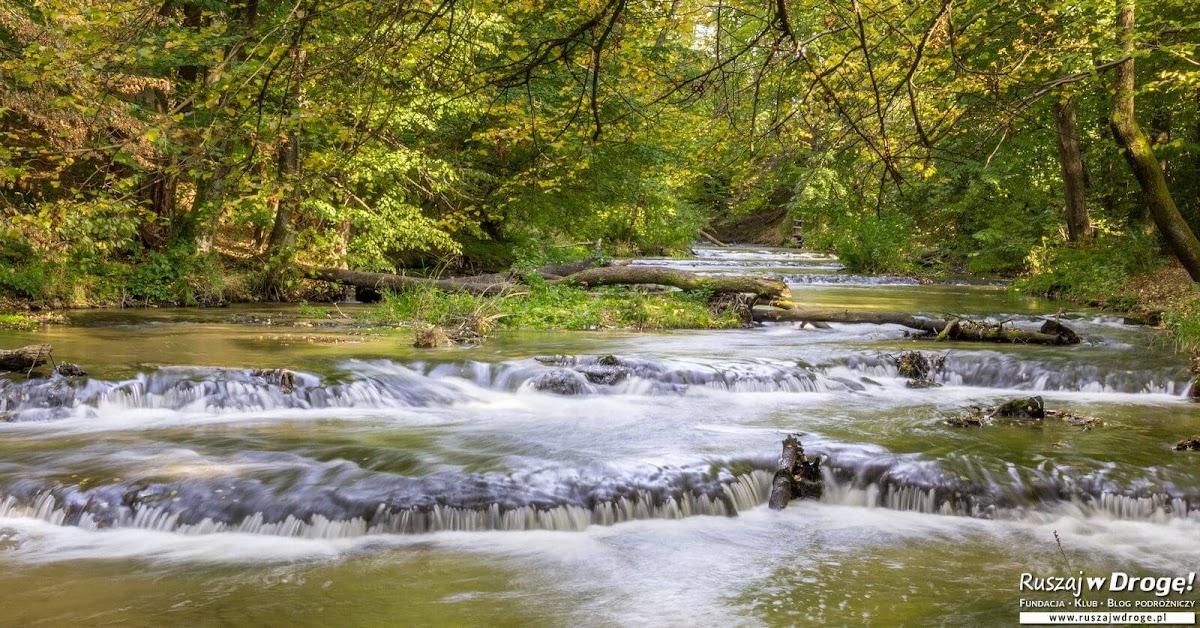 Rezerwat Szumy nad Tanwia