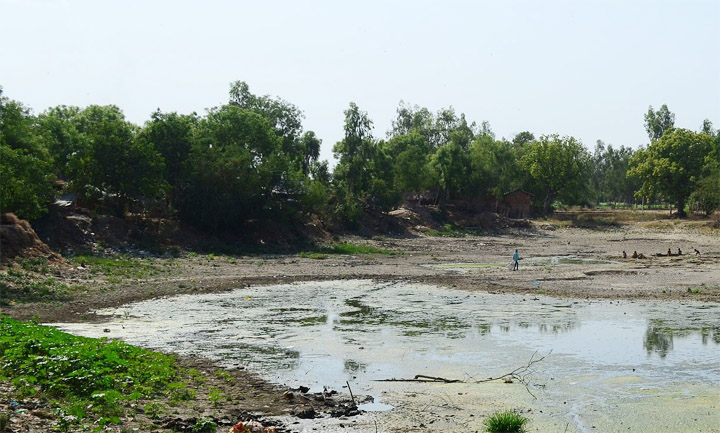 village-pond-in-amroha