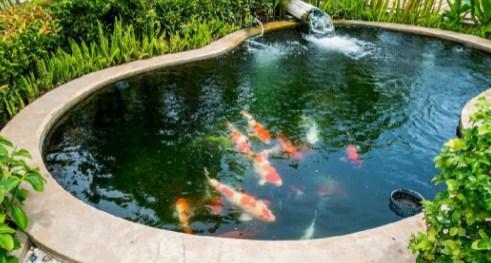 17 Arti Mimpi Melihat Ikan Di Kolam Menurut Primbon Jawa Terlengkap