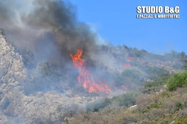 Αργολίδα: Μεγάλη πυρκαγιά στα Πυργιώτικα Ναυπλίου (βίντεο)