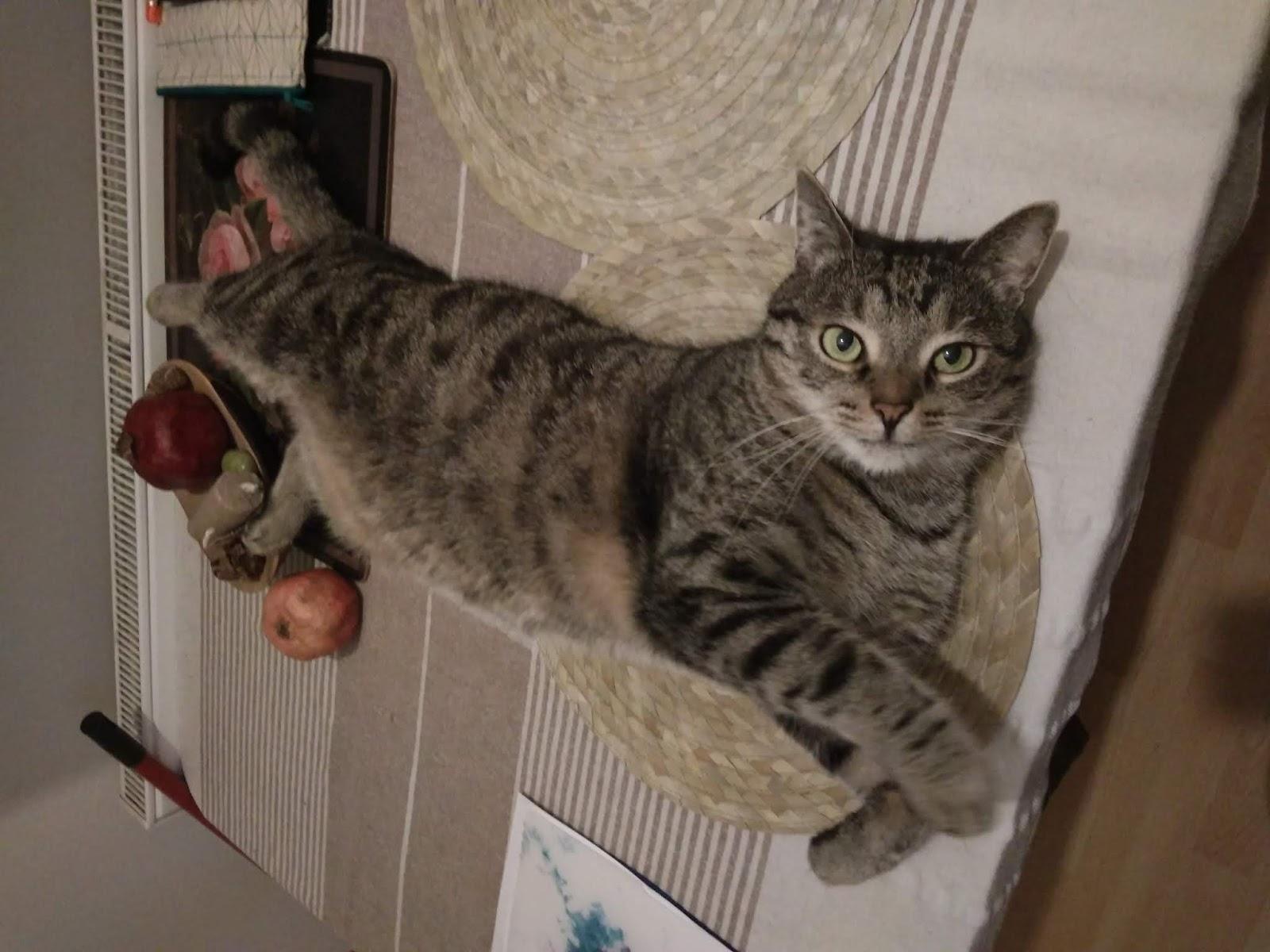 Velmi těsný kočička dostat v prdeli