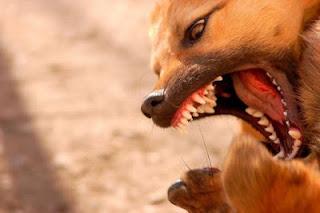 4 maneras de prevenir la agresividad en perros