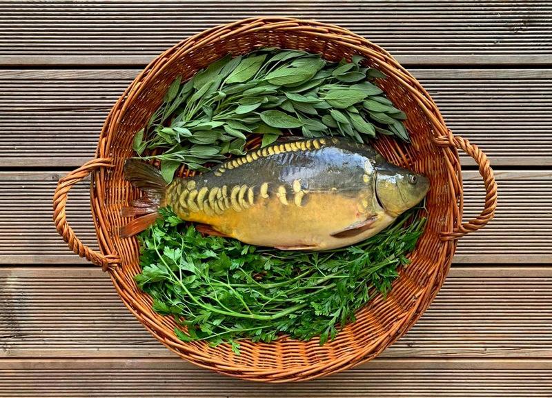 hodowla karpia, karp bio, bio hodowla karpia, karp,karp bio, karp, ryby z serca natury, dania z karpia, pulpety z karpia, karp pieczony, karp smażony, karp wedzony, gospodarstwo rybackie zawolcze, zawolcze