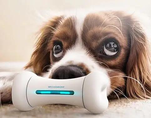 Los Más Geniales Gadgets para Perros que tu Mejor Amigo Necesita