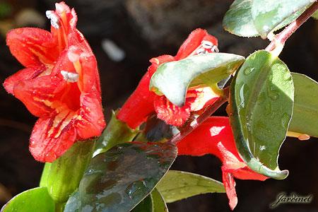 Atrai beija-flores