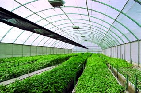 crop improvement s advantages disadvantage s Advantage and disadvantage of agriculture essay a few of the advantages perceived in the use of biotechnology in agriculture are rapid ohm's law » various.