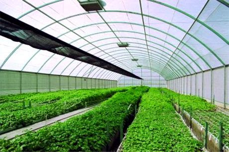 Advantages and Disadvantages of Greenhouse Technology          ~          Agriculture and Technology