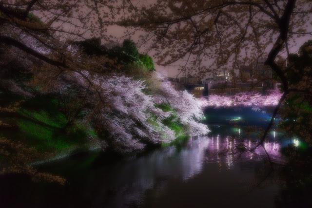 田安門前の桜~北の丸公園