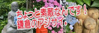 ちょっと素敵なんです!鎌倉のアジサイ