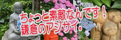 ちょっと素敵なんです!鎌倉のアジサイ。