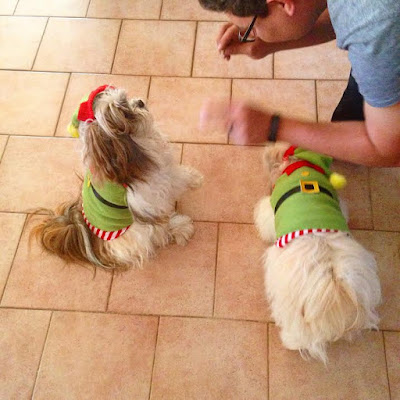 Christmas Elf Puppies