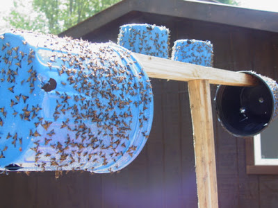 How to Create a DIY Outdoor Sticky Fly Trap | Paris ...